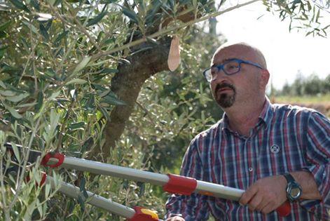 Lorenzo Polacco, imprenditore della olio poldo, mentre pota le sue piante.
